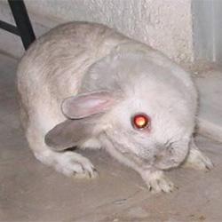 konijn aan de diarree