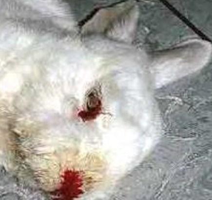 kat nierfalen laatste fase