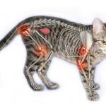 Artrose kat