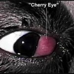 CherryEye3