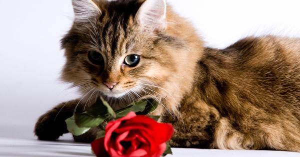 Algemene info over katten