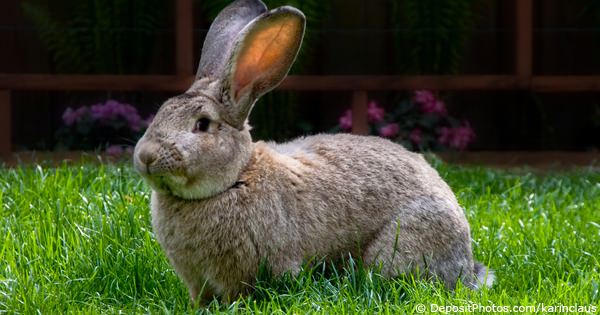 Algemene info over konijnen